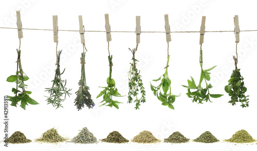 Fresh herbs hanging on a rope.