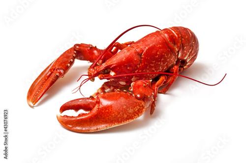 Fototapeta Cooked Lobster.