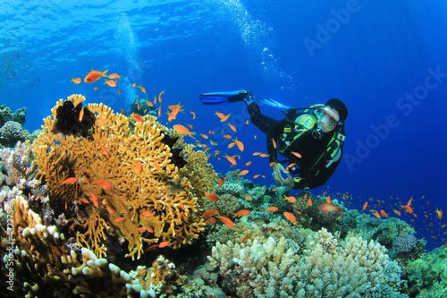 Photo Scuba Diver explores a coral reef in the Red Sea
