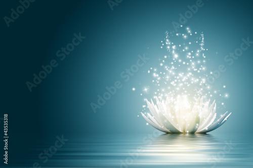 Lotus flower #43535318