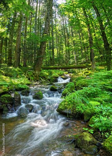 Photo Ruisseau vosgien