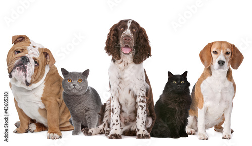 Group of cats and dogs #43685318