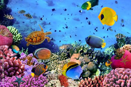 Fotografía Photo of a coral colony