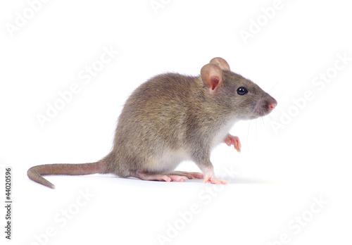 Fotografie, Obraz rat