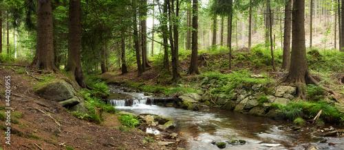 Obraz na plátne mountains river in forest