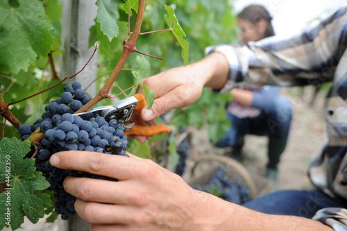 Carta da parati Winemakers in cellar using electronic tablet
