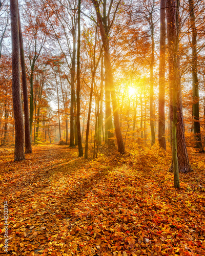 Sunset in the autumn forest #45323714