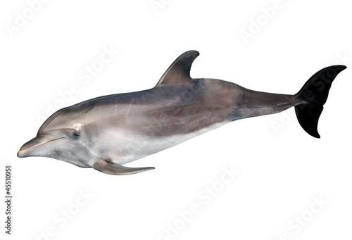Fotografiet isolated on white grey doplhin
