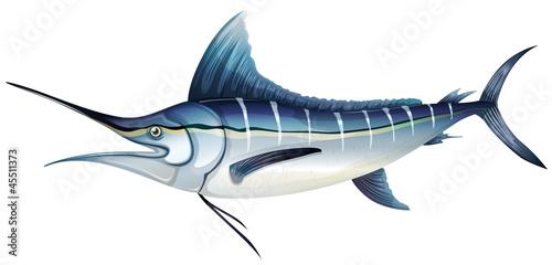 Obraz na płótnie Atlantic blue marlin