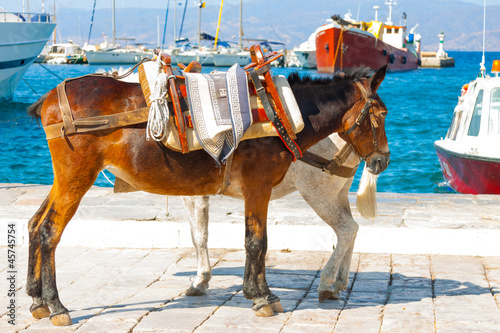 Donkeys by port and boats