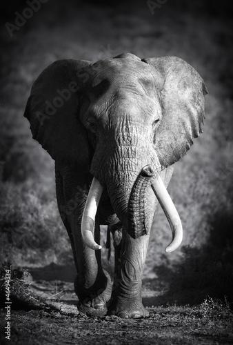 Elephant Bull (Artistic processing)