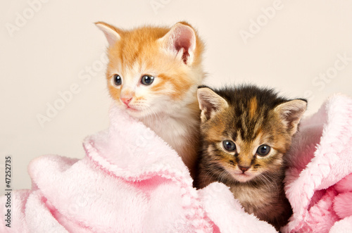 Two kittens in a pink blanket #47252735