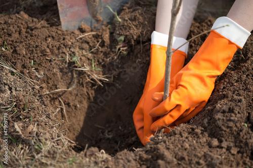 Stampa su Tela planting   shrubbery or tree