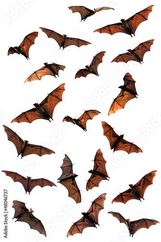 Foto Spooky Halloween fruit bats