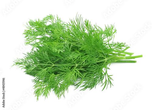 Photo Fennel herbs