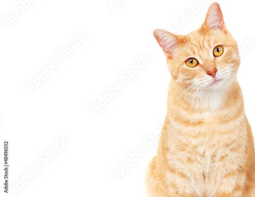 Pet cat. Fototapeta