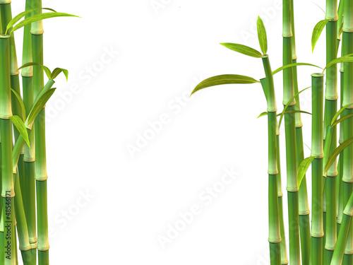 Bambus auf weißem Hintergrund
