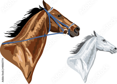 Valokuva two horse heads - brown with bridle and white