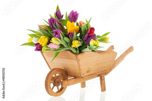 Canvas Print Wheel barrow full tulips