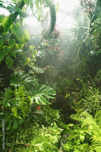 Tropical rainforest #48958797