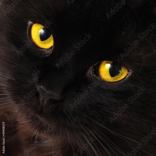 Black cat looking to you with bright yellow eyes #49408559