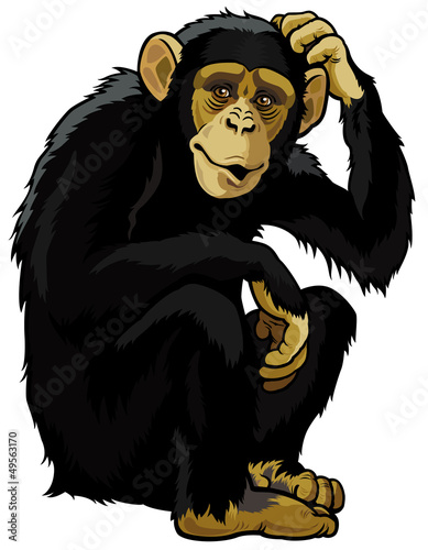 Stampa su Tela chimpanzee
