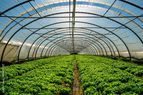 Canvastavla Greenhouse nursery for the cultivation of salad and other vegatable