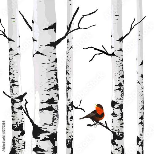 Fototapeta Rysunek brzóz z kolorowym ptakiem na ścianę
