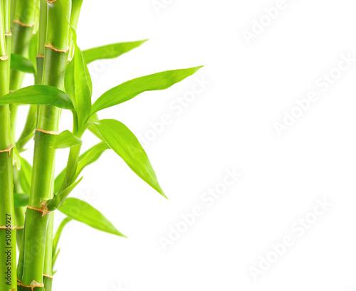 Fototapeta premium Bambusowy tło z kopii przestrzenią
