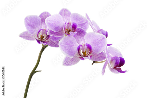 Wallpaper Mural Light purple orchid isolated on white