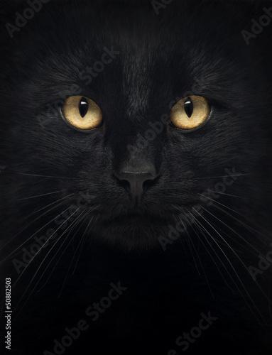 Stampa su Tela Close-up of a Black Cat looking at the camera