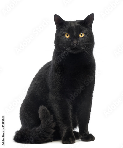 Foto Black Cat sitting and looking at the camera, isolated on white
