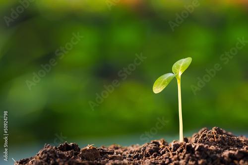 Fényképezés Green sprout
