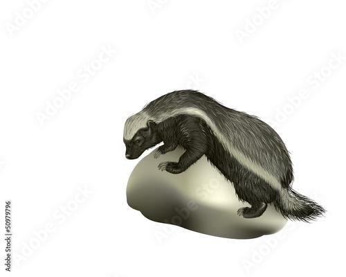 Fotografie, Tablou honey badger