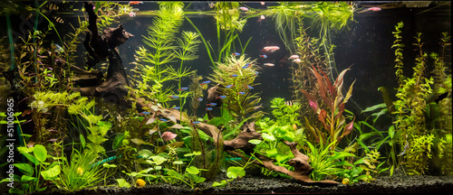 Ttropical freshwater aquarium with fishes #51006965