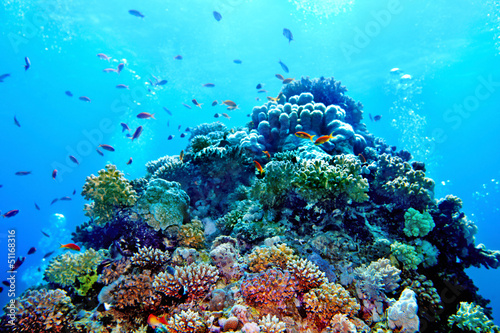 Photographie Group of coral fish  water.