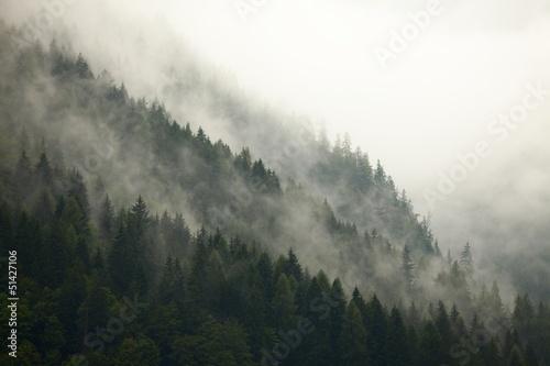 Mgła leśna