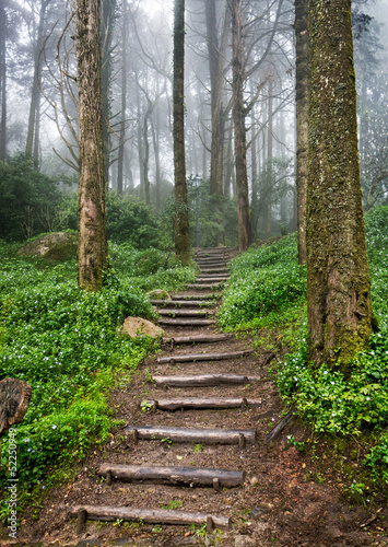Fototapeta premium Ścieżka leśna