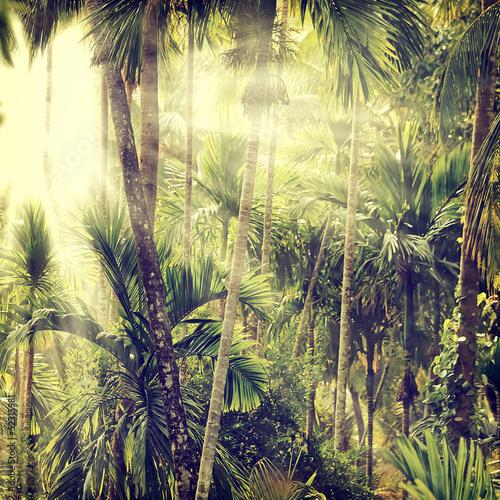 Naklejki na meble Dżungla w stylu retro