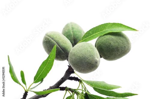 Fotografija green almonds