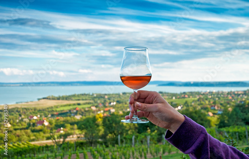 Obraz na plátne Nice vineyard
