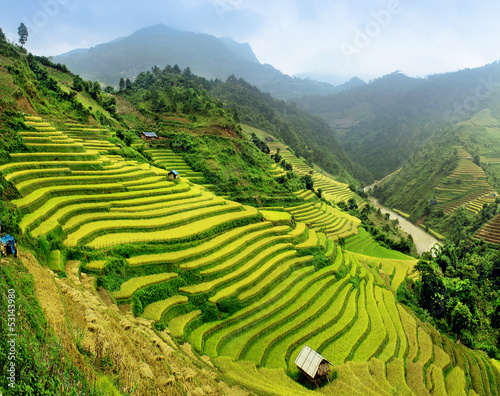 Rice fields Mu Cang Chai, Vietnam #53143980