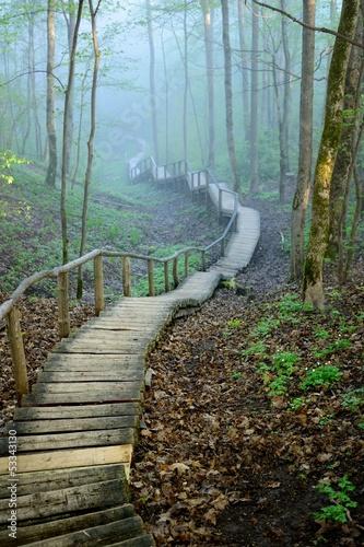 Fototapeta premium Staiway w lesie znika w silnej mgle