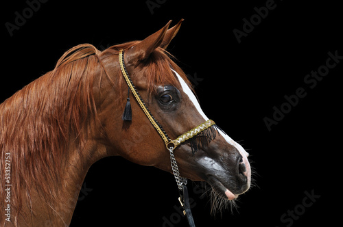 horse on a black background #53352753