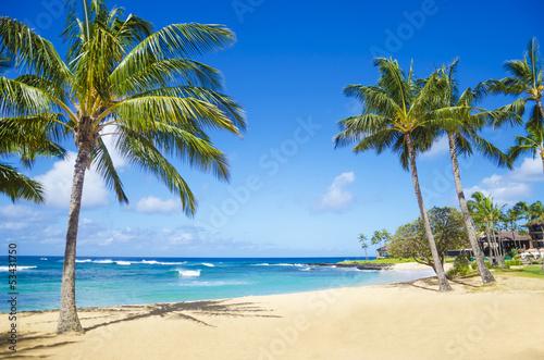 Carta da parati Palm trees on the sandy beach in Hawaii