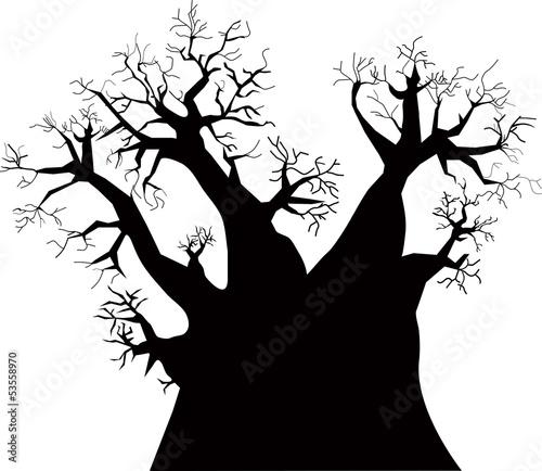 Photo Baobab tree