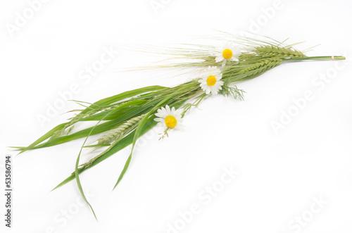 bukiet kwiatów polnych i zbóż