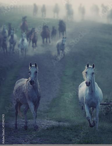 Wild horses running through the rular path
