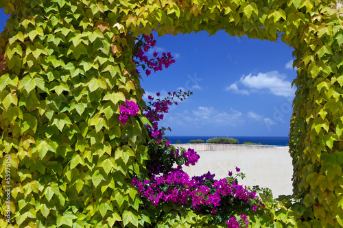 Fototapeta Widok z naturalnego okna z kwiatami petunii ma plażę i morze do pokoju