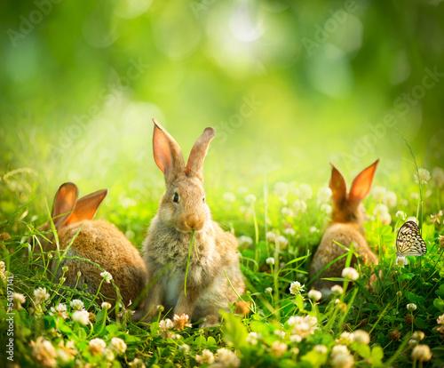 Obraz na płótnie Rabbits. Art Design of Cute Little Easter Bunnies in the Meadow